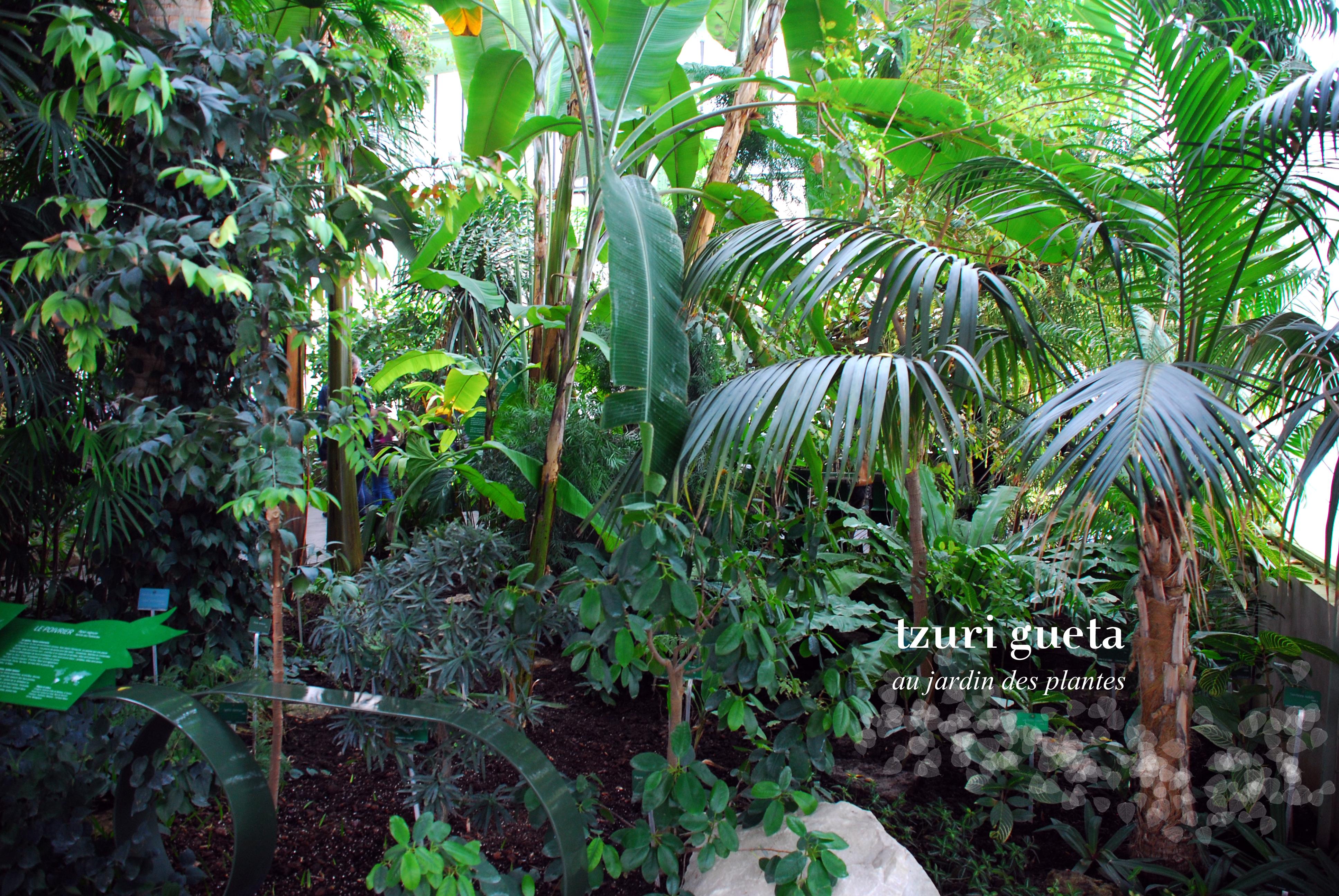 Les serres du jardin des plantes sublim e par une for Resto jardin des plantes