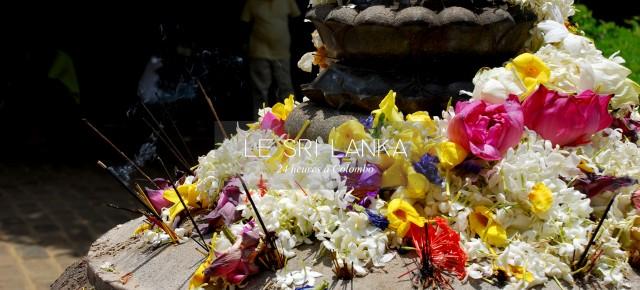 CARNET DE VOYAGE #02 SRI LANKA / COLOMBO EN 24 HEURES