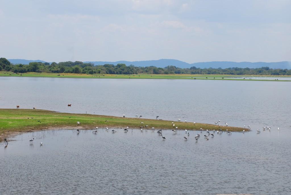 carnet-voyage-sri-lanka-polonnaruwa-by-le-polyedre_1