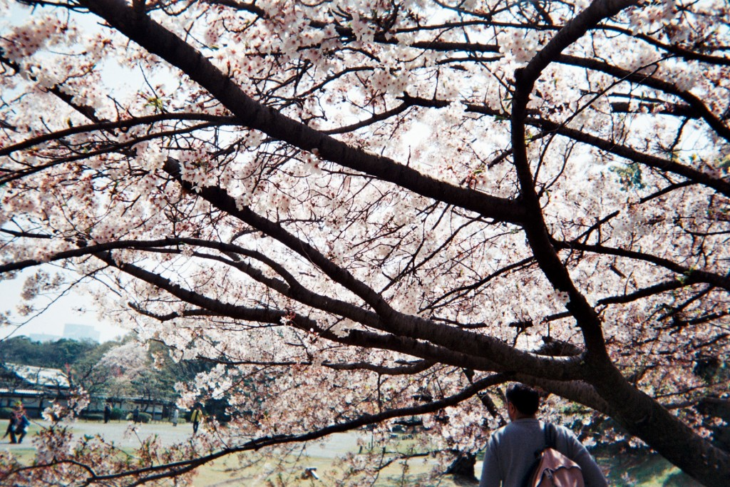 carnet-voyage-japon-appareil-photo-jetable-tokyo-by-le-polyedre (12)
