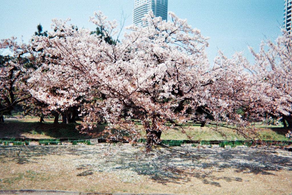 carnet-voyage-japon-appareil-photo-jetable-tokyo-by-le-polyedre (13)