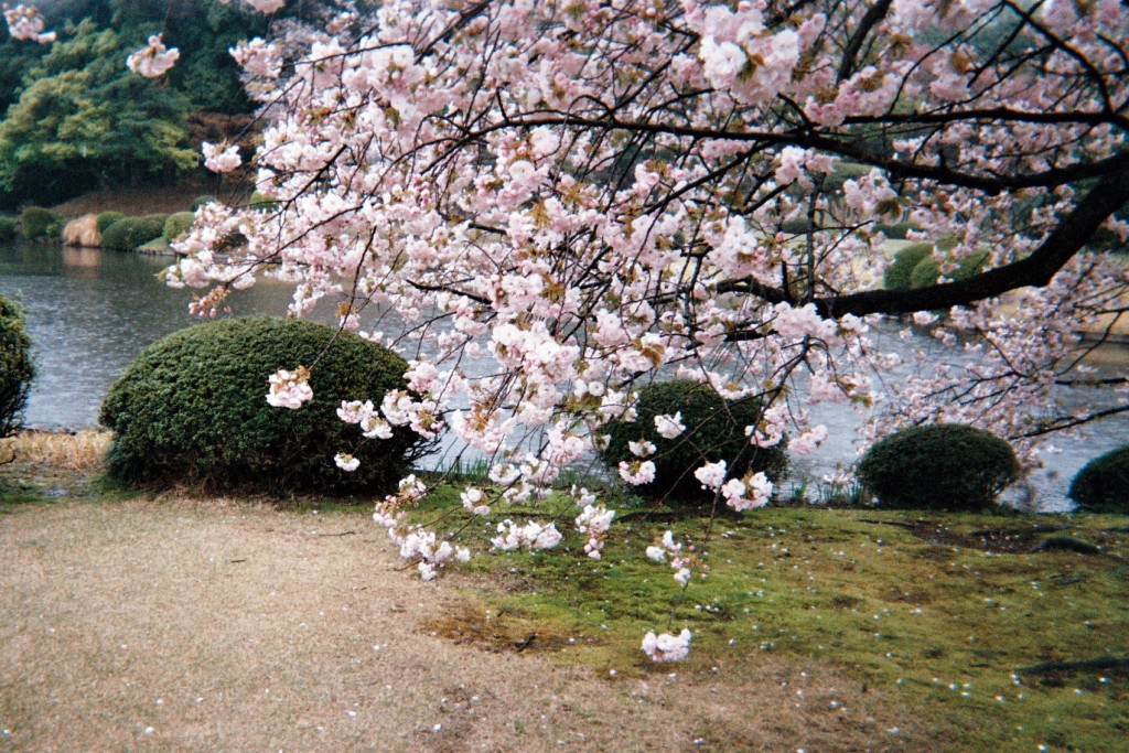 carnet-voyage-japon-appareil-photo-jetable-tokyo-by-le-polyedre (31)