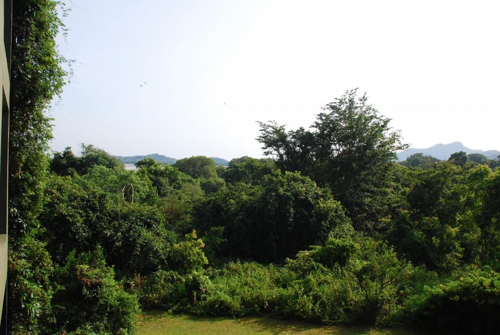 carnet-voyage-sri-lanka-sigiriya-heritance-kandalama-hotel-by-le-polyedre_19