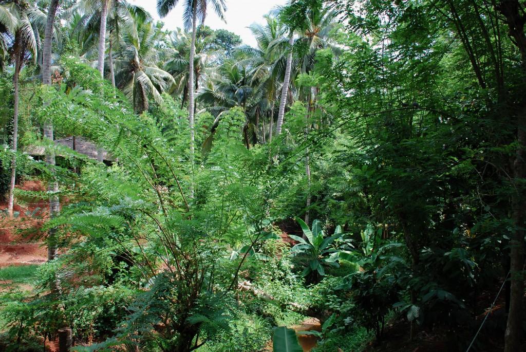 carnet-voyage-sri-lanka-spice-gardens-by-le-polyedre_32