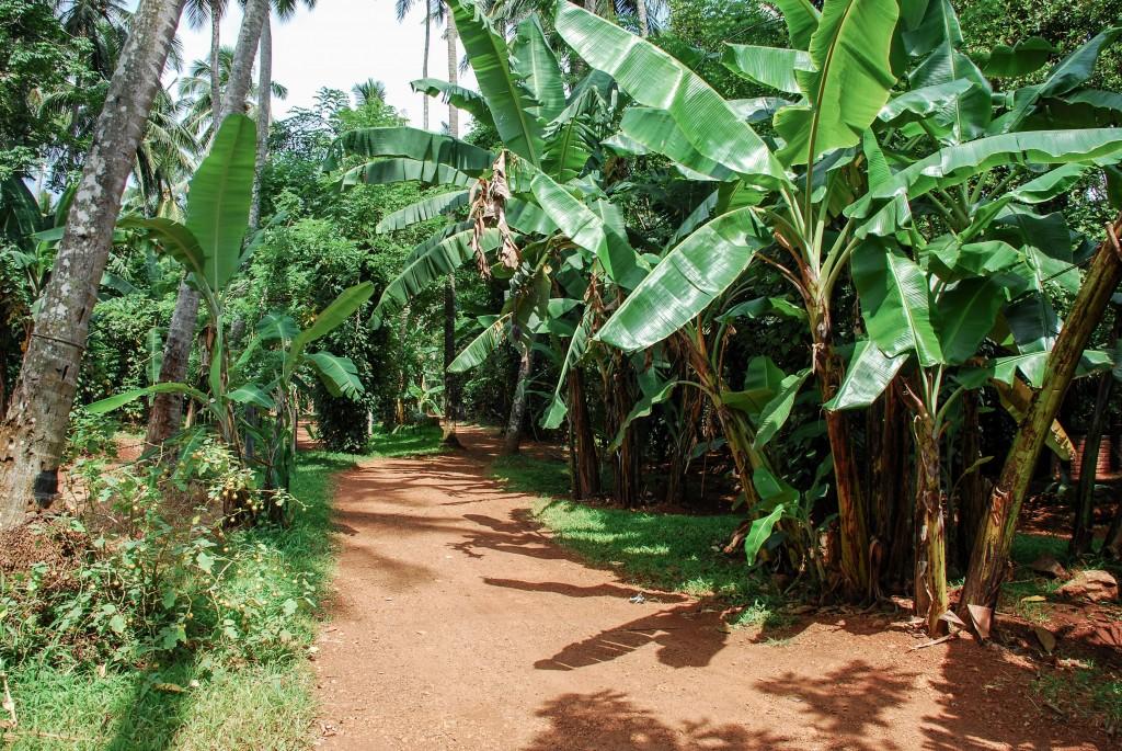 carnet-voyage-sri-lanka-spice-gardens-by-le-polyedre_33