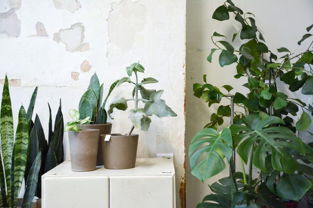 les-grands-voisins-mama-petula_concept-store-vegetal-paris-14-by-le-polyedre (12)