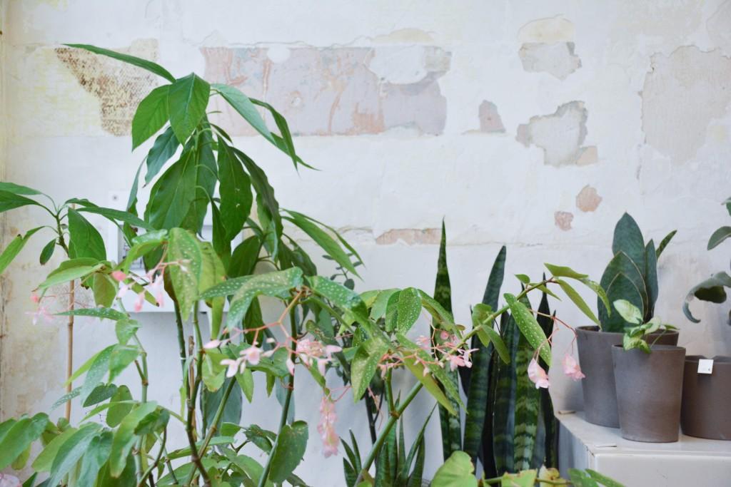 les-grands-voisins-mama-petula_concept-store-vegetal-paris-14-by-le-polyedre (13)
