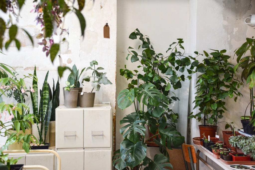 les-grands-voisins-mama-petula_concept-store-vegetal-paris-14-by-le-polyedre (16)