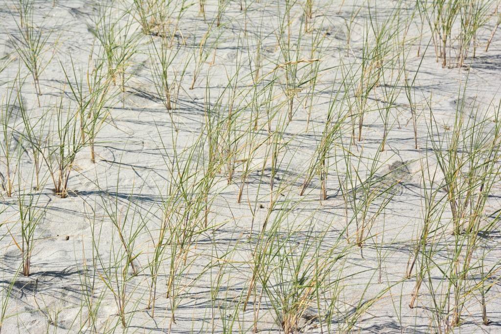 week-end-bretagne-morbihan-lorient-ile-de-groix-voyage-by-le-polyedre (126)