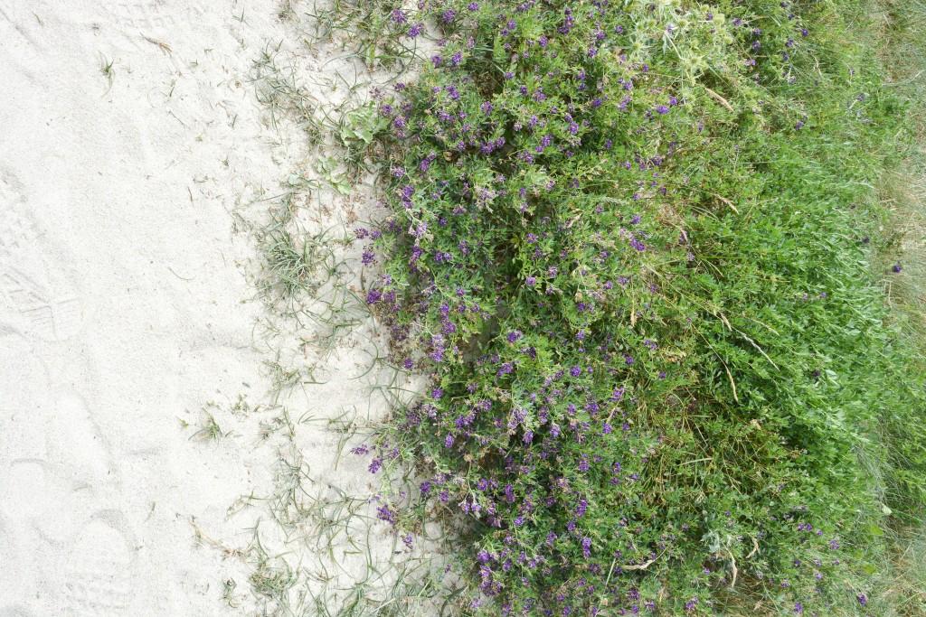 week-end-bretagne-morbihan-lorient-ile-de-groix-voyage-by-le-polyedre (25)
