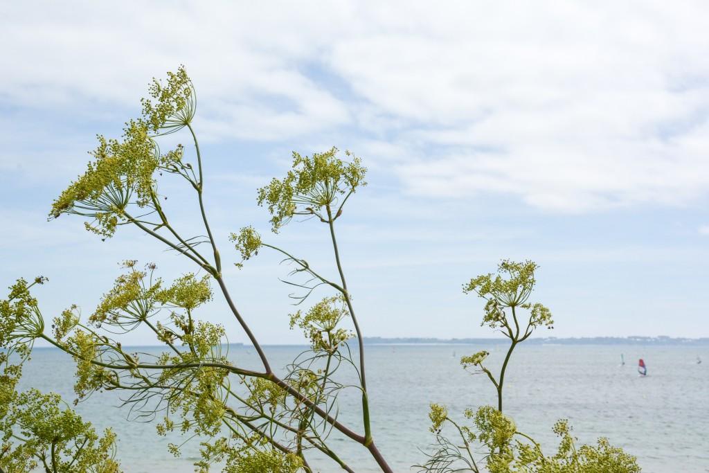 week-end-bretagne-morbihan-lorient-ile-de-groix-voyage-by-le-polyedre (36)