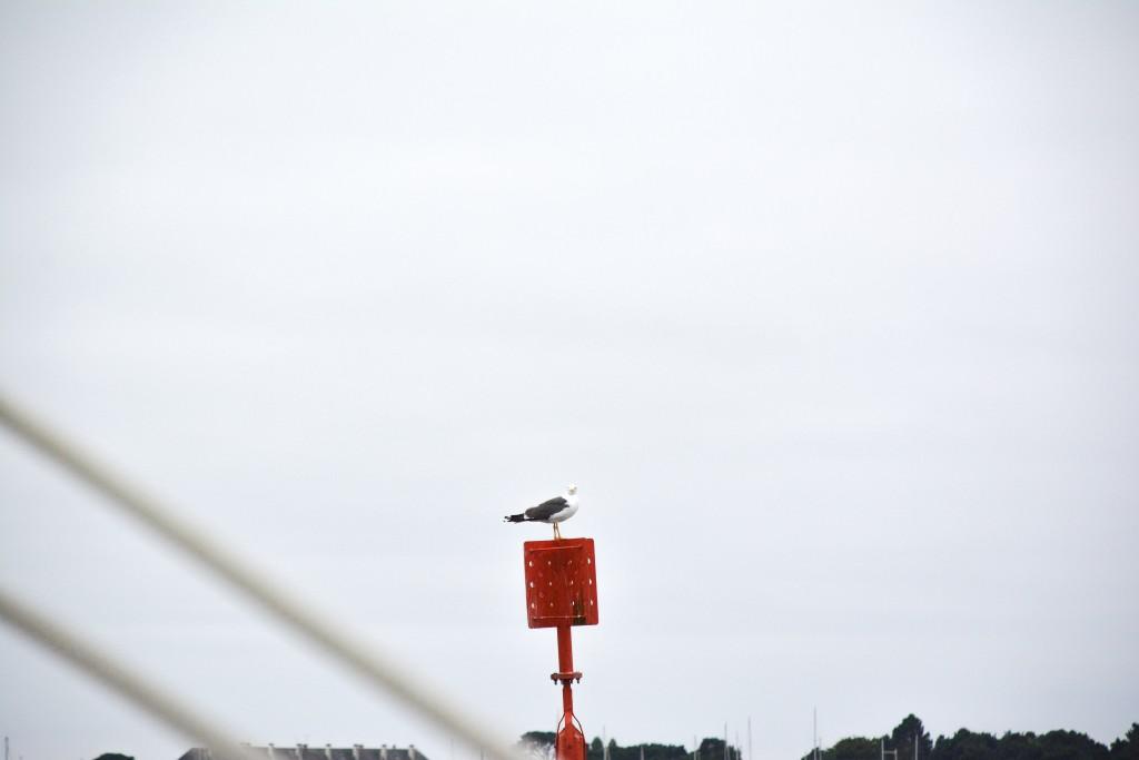 week-end-bretagne-morbihan-lorient-ile-de-groix-voyage-by-le-polyedre (57)