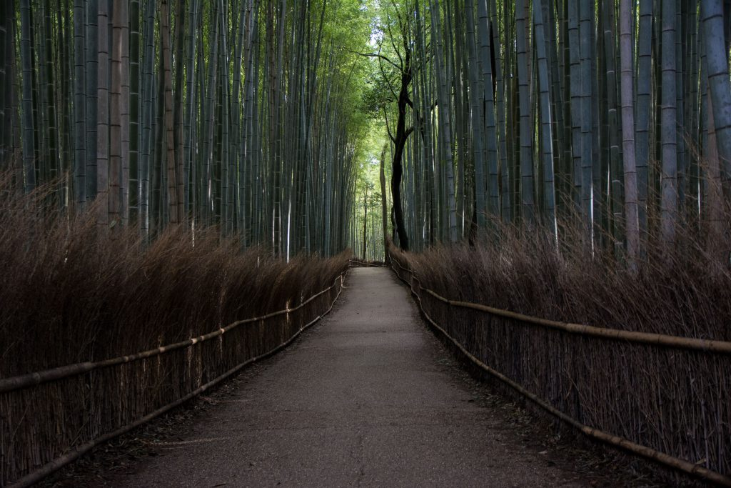 voyage japon kyoto city guide