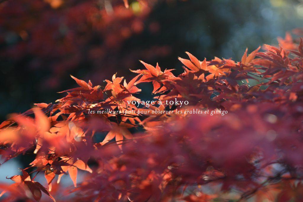 voyage-japon-tokyo-spot-automne-momiji-koyo-yoyogi-12