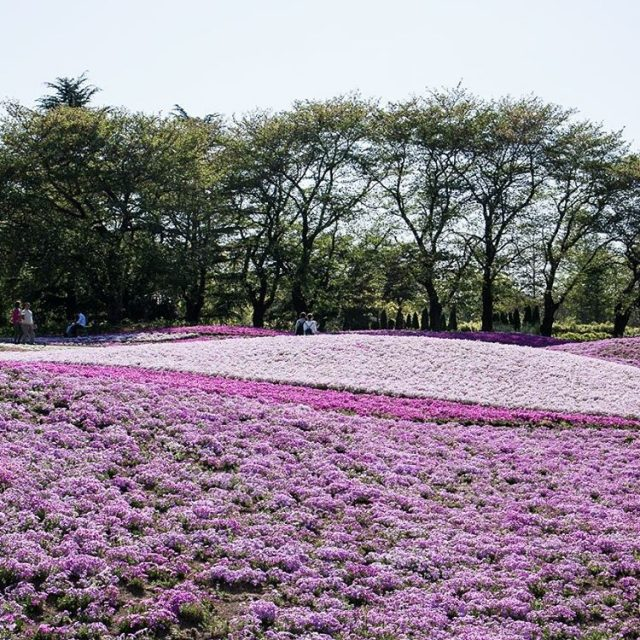 Pink floor in Tobu Treasure Garden in Tatebayashi  hellip