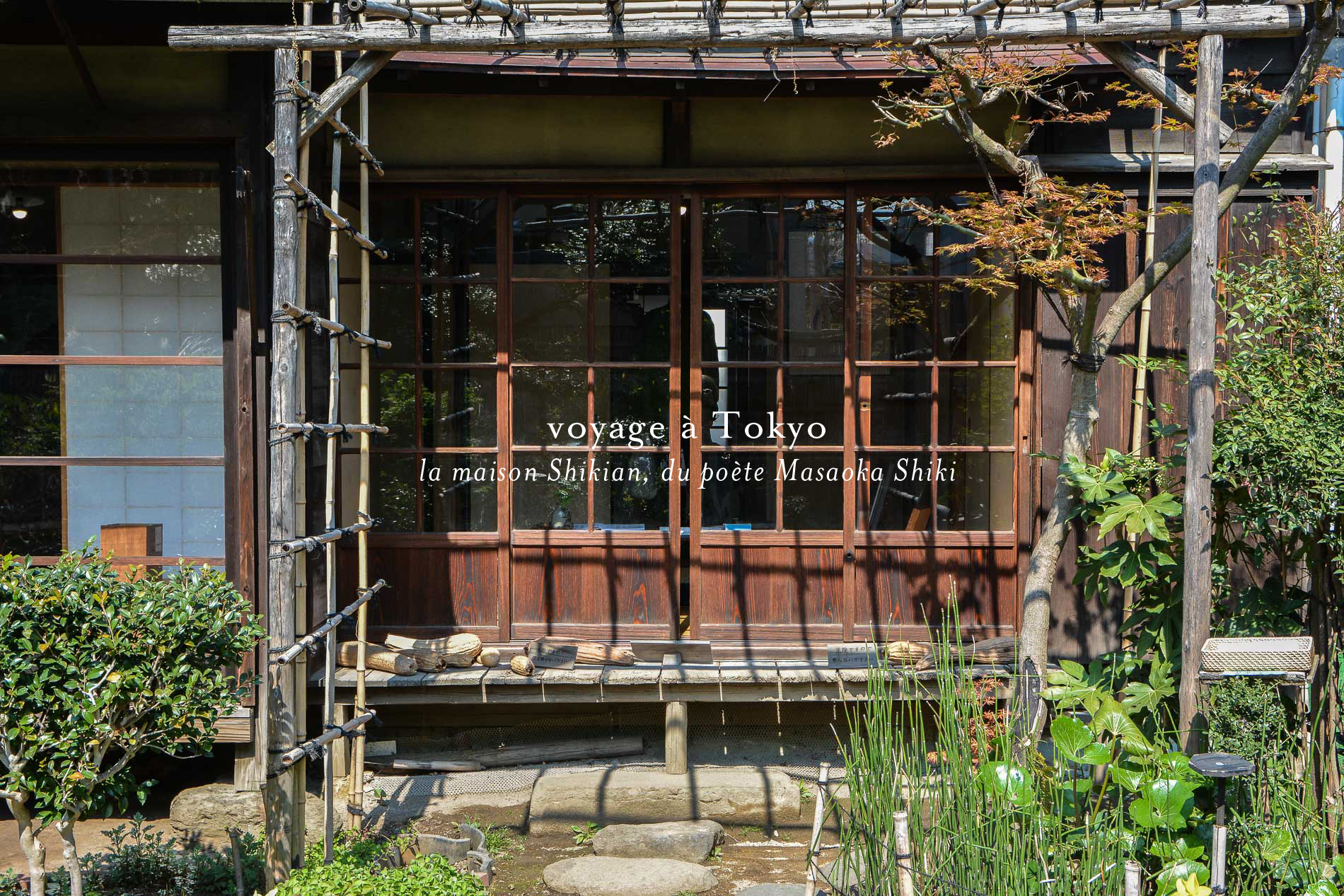 Voyage tokyo yanaka maison shikian masaoka shiki poete visuel le poly dre - Maison de tokyo paris ...