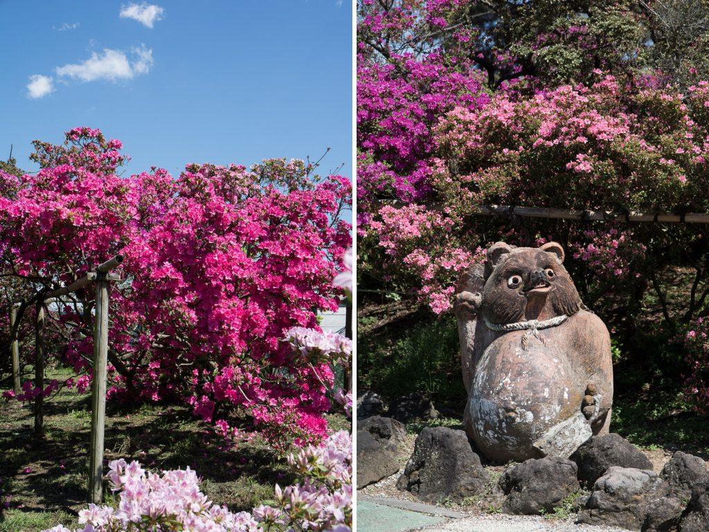 le festival des azalées au Tsutsujigaoka park à Tatebayashi