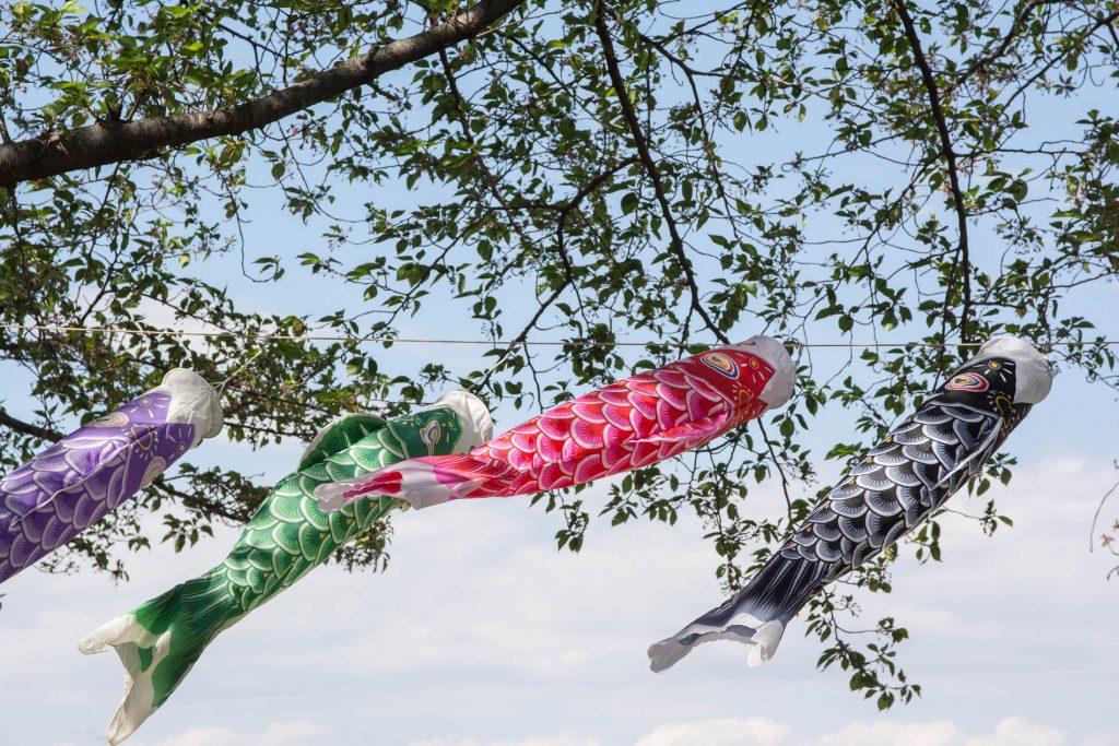 les koinobori et leurs couleurs pendant le Kodomo No Hi à Tatebayashi