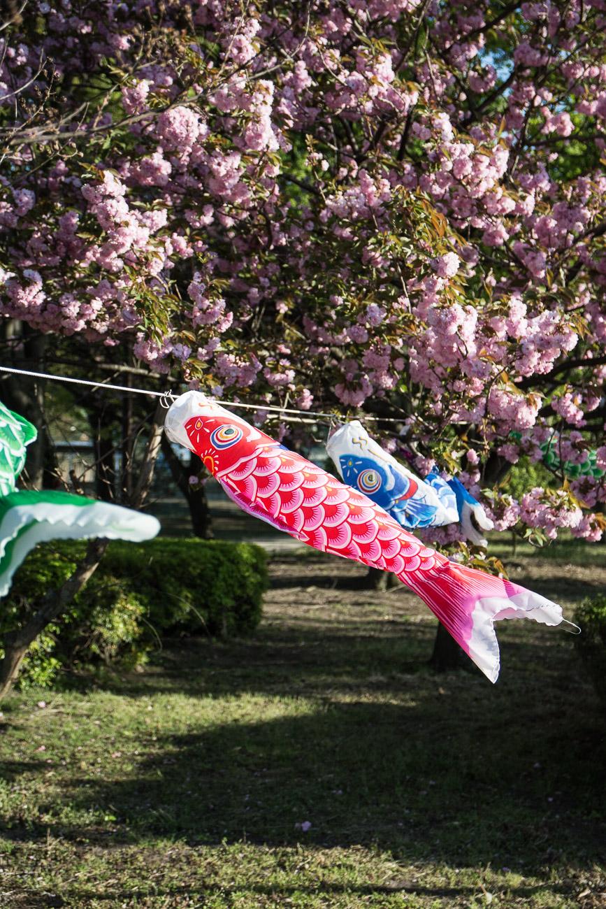 le festival des enfants le Kodomo No Hi à Tatebayashi et ses koinobori