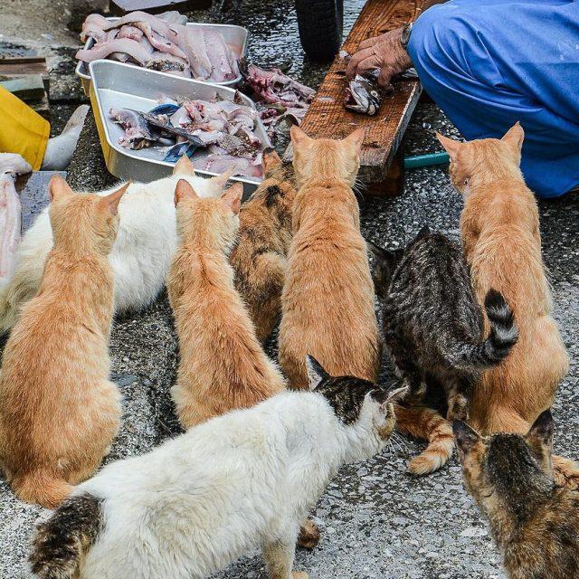 Au japon il y a beaucoup dles o des chatshellip