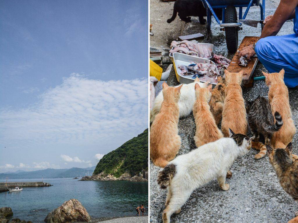 L'île aux chats Fukajima dans la préfecture d'Oita à Kyushu au Japon