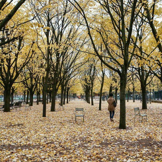Au jardin du Luxembourg il y a ces arbres ohellip