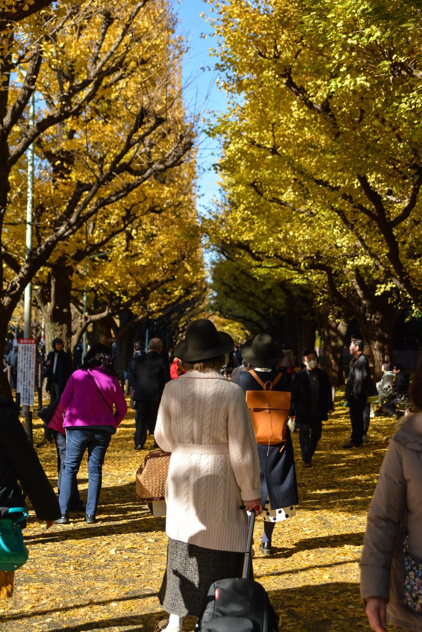 Les ginkgo dorés à Tokyo à Icho Namiki pendant l'automne