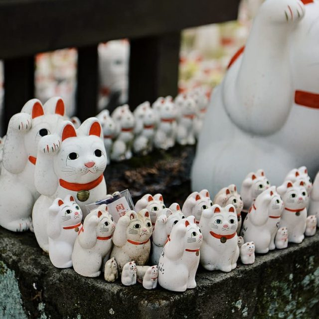 Nouvel article sur le blog Gotokuji le temple aux chatshellip
