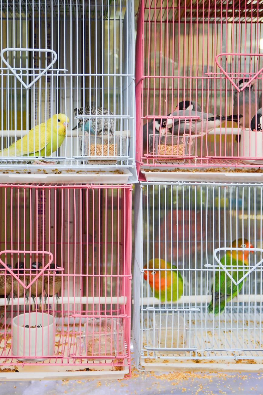 voyage shanghai marché aux oiseaux