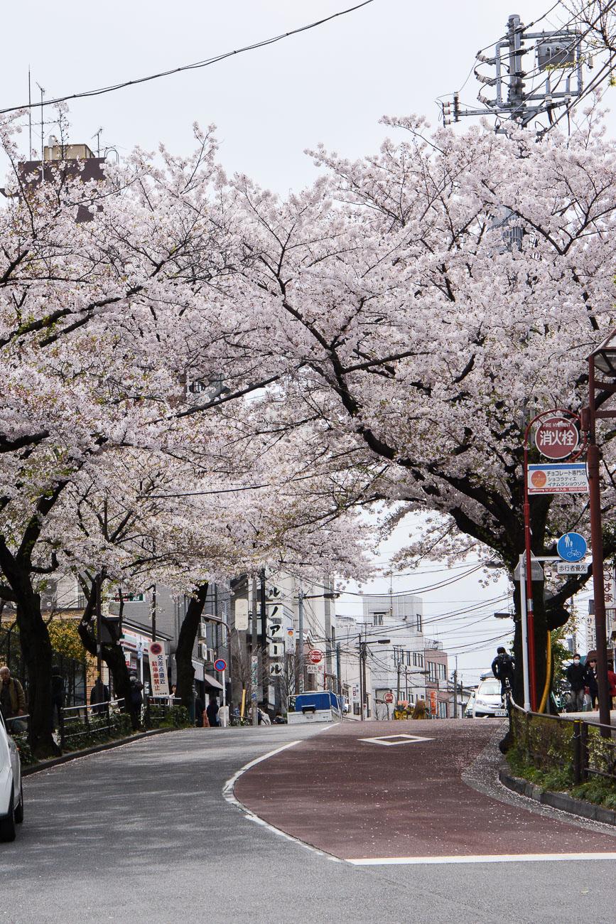 Hanami Les 15 Endroits Ou Voir Les Cerisiers En Fleurs A Tokyo