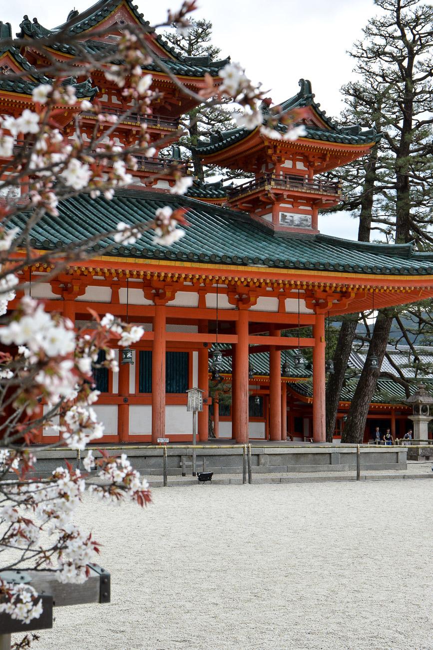 Le sanctuaire Heian Jingu est l'un des meilleurs endroits pour voir les cerisiers en fleurs à Kyoto pendant Hanami