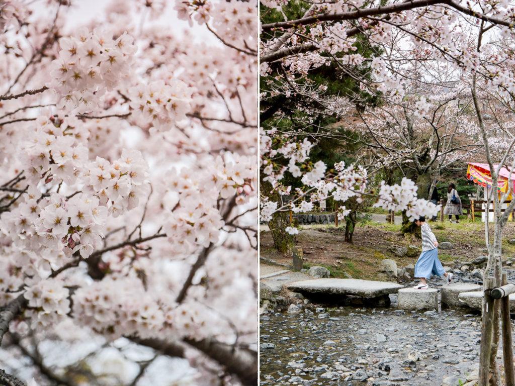 Le jardin de Maruyama est l'un des meilleurs endroits à Kyoto pour observer les cerisiers en fleLe jardin de Maruyama est l'un des meilleurs endroits à Kyoto pour observer les cerisiers en fleurs pendant Hanami