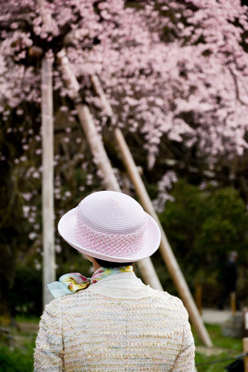 Les 15 meilleurs endroits pour voir les cerisiers en for Hotel jardin de fleurs kyoto