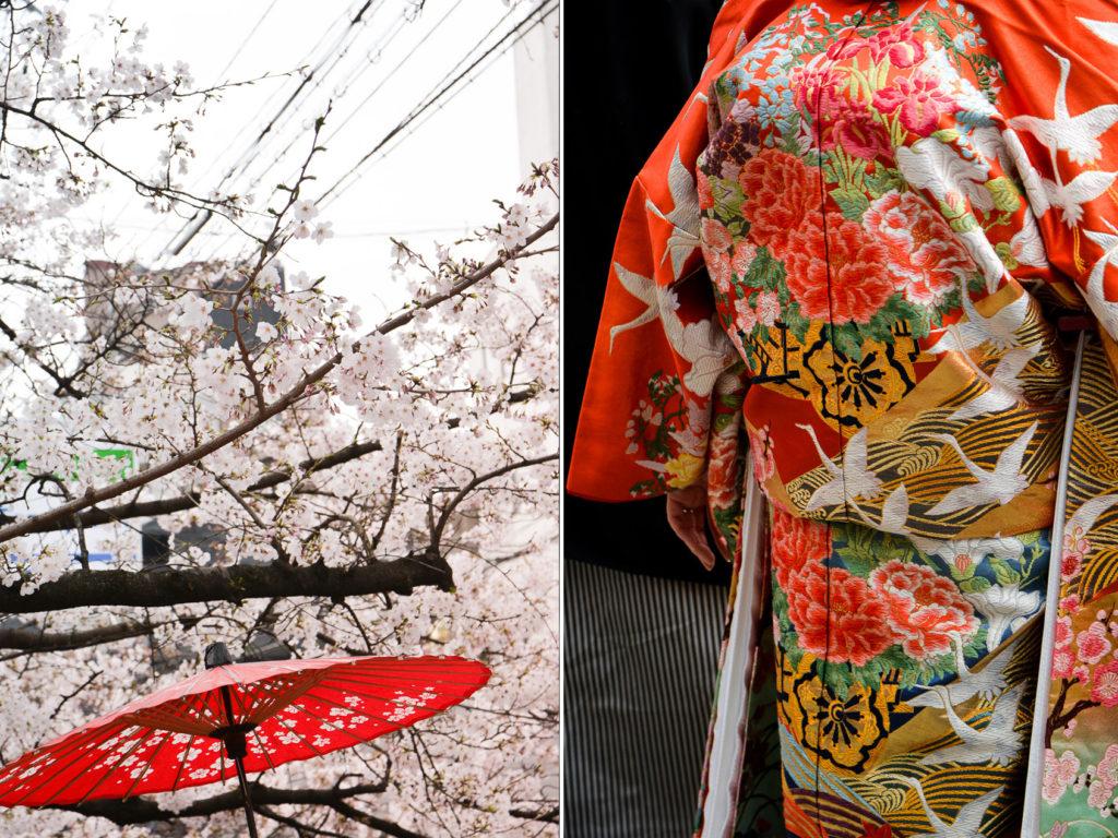 Gion Shirakawa est l'un des meilleurs endroits pour voir les cerisiers en fleurs à Kyoto pendant Hanami