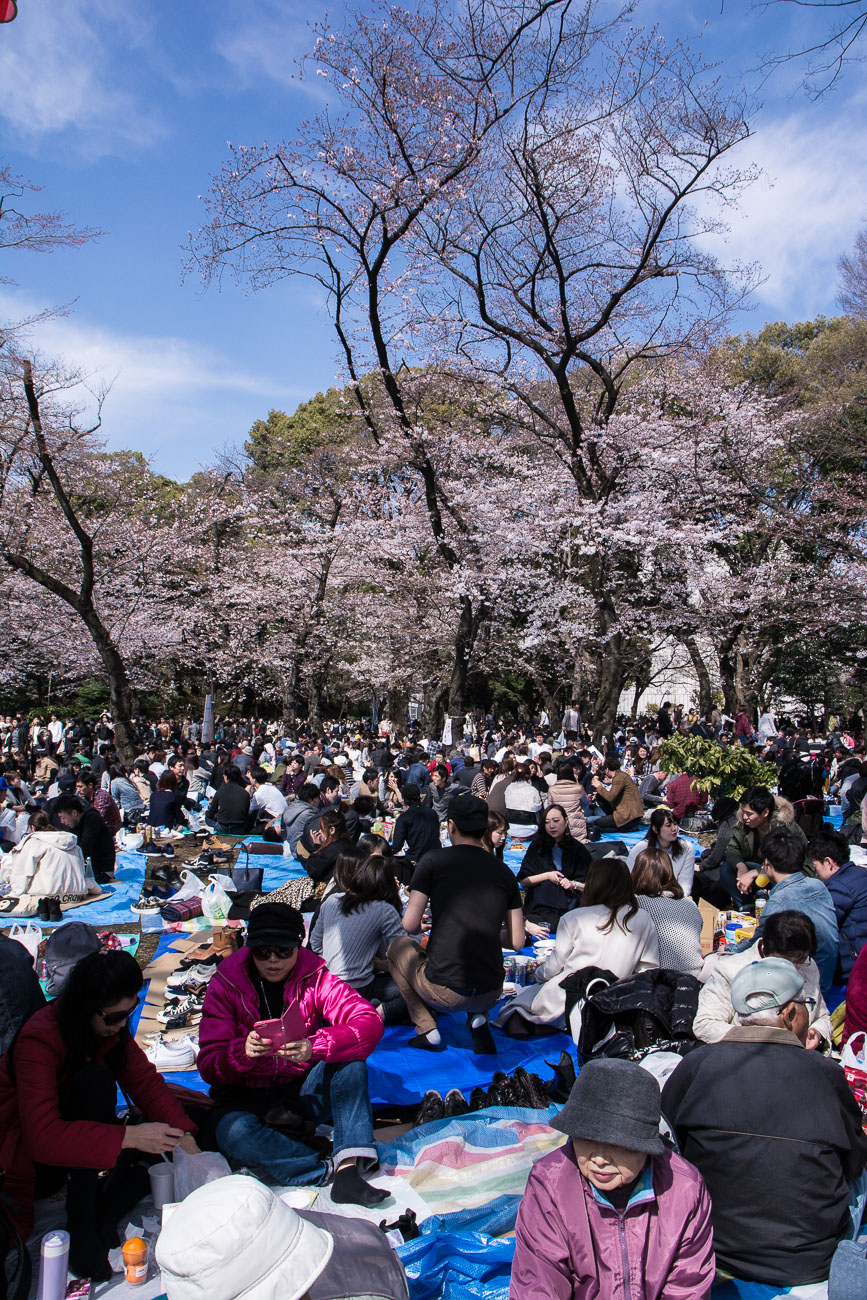 voyage tokyo hanami cerisiers fleurs ueno parK