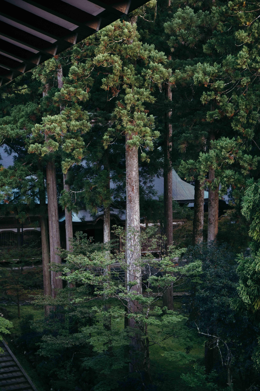 Dormir dans une temple et participer au zazen dans le temple Eiheiji dans la prefecture de Fukui au Japon